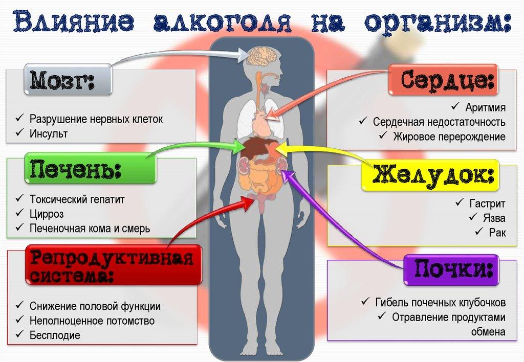 Алкоголь и его влияние на здоровье человека